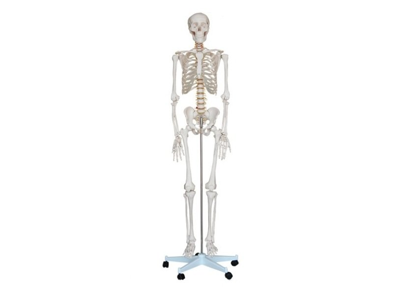 how to make a skeleton that can stand